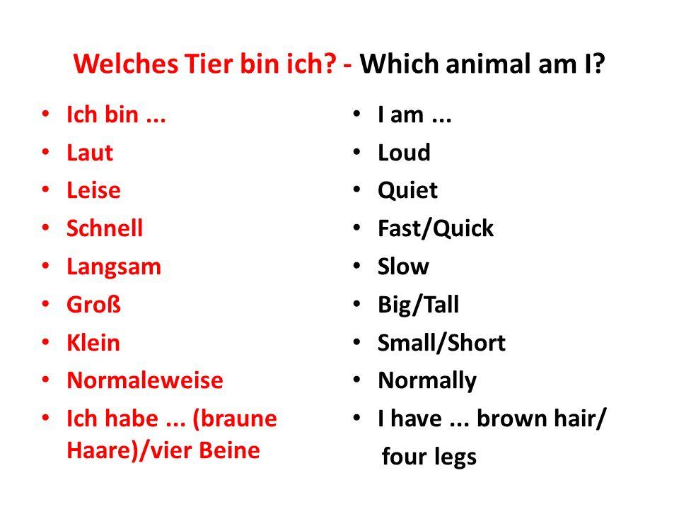 Welches Tier bin ich? - Which animal am I? Ich bin... Laut Leise Schnell Langsam Groß Klein Normaleweise Ich habe... (braune Haare)/vier Beine I am...