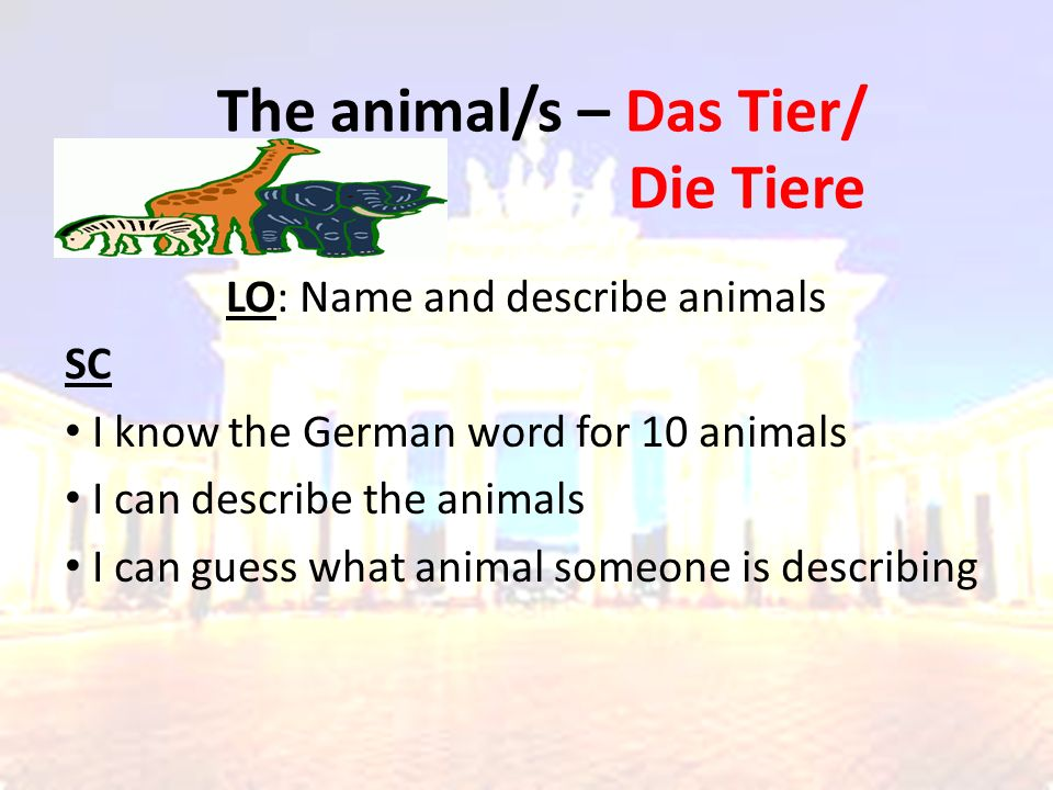The animal/s – Das Tier/ Die Tiere LO: Name and describe animals SC I know the German word for 10 animals I can describe the animals I can guess what