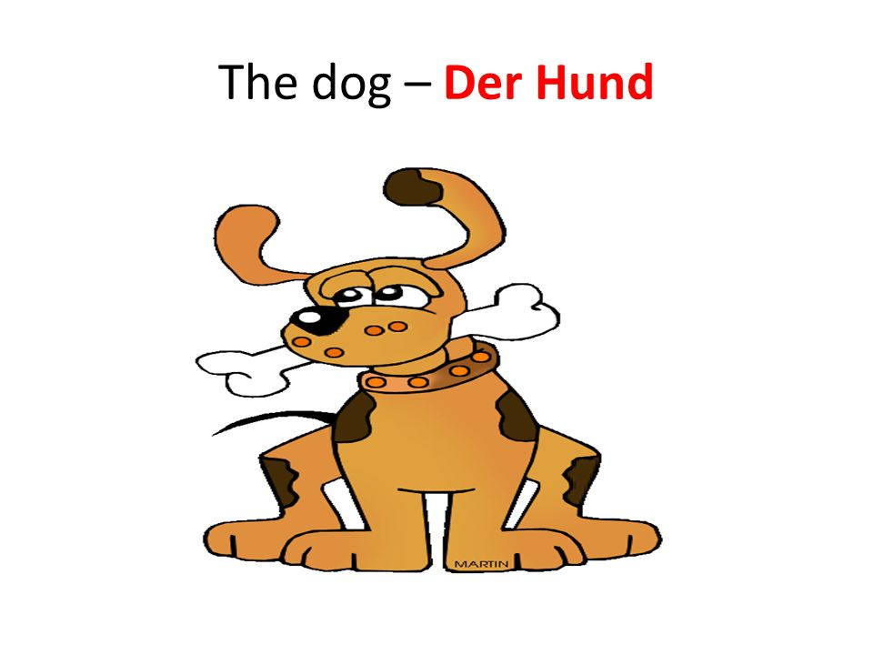 The dog – Der Hund