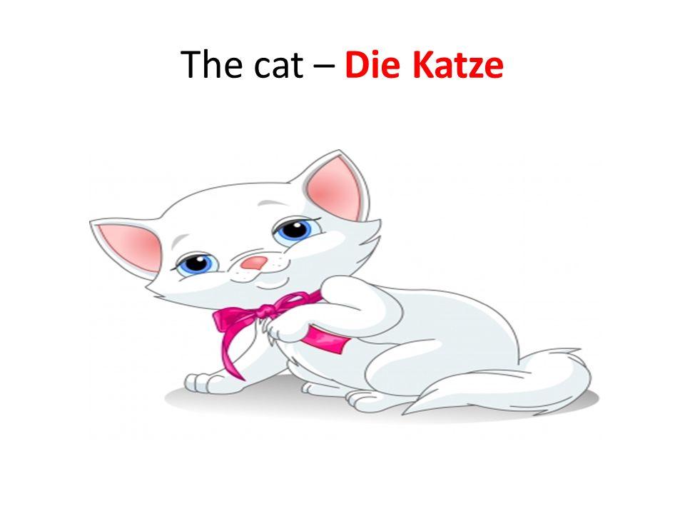 The cat – Die Katze