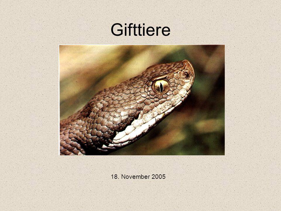 Skolopender Ordnung: Chilopda Einziges Gifttier auf den Kanarischen Inseln – aber auch dort sehr selten .
