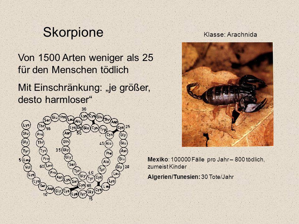 """Skorpione Klasse: Arachnida Von 1500 Arten weniger als 25 für den Menschen tödlich Mit Einschränkung: """"je größer, desto harmloser Mexiko: 100000 Fälle pro Jahr – 800 tödlich, zumeist Kinder Algerien/Tunesien: 30 Tote/Jahr"""