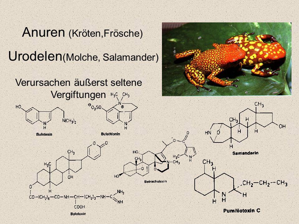 Anuren (Kröten,Frösche) Urodelen (Molche, Salamander) Verursachen äußerst seltene Vergiftungen