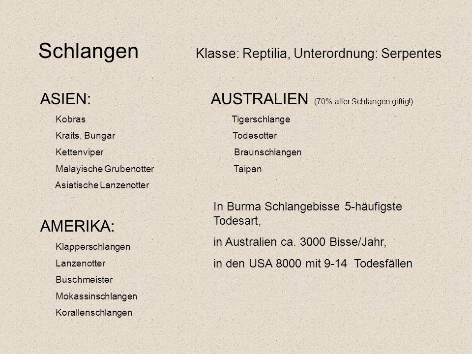 Schlangen Klasse: Reptilia, Unterordnung: Serpentes ASIEN: AUSTRALIEN (70% aller Schlangen giftig!) Kobras Tigerschlange Kraits, Bungar Todesotter Kettenviper Braunschlangen Malayische Grubenotter Taipan Asiatische Lanzenotter AMERIKA: Klapperschlangen Lanzenotter Buschmeister Mokassinschlangen Korallenschlangen In Burma Schlangebisse 5-häufigste Todesart, in Australien ca.