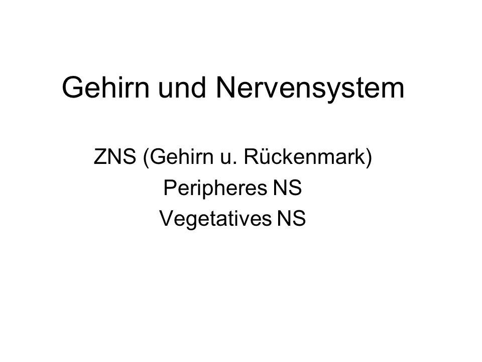 Gehirn und Nervensystem ZNS (Gehirn u. Rückenmark) Peripheres NS Vegetatives NS