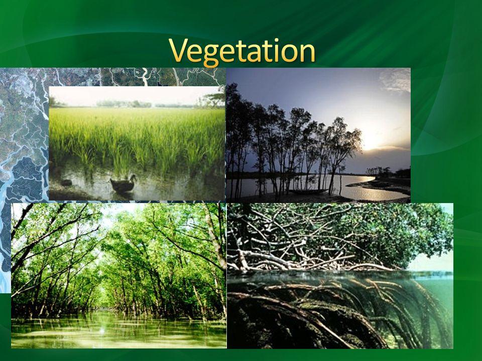 o Zwischenstromland und Westbengalen trockener o Sundarbans o Mangroven o Madhupur-Wald