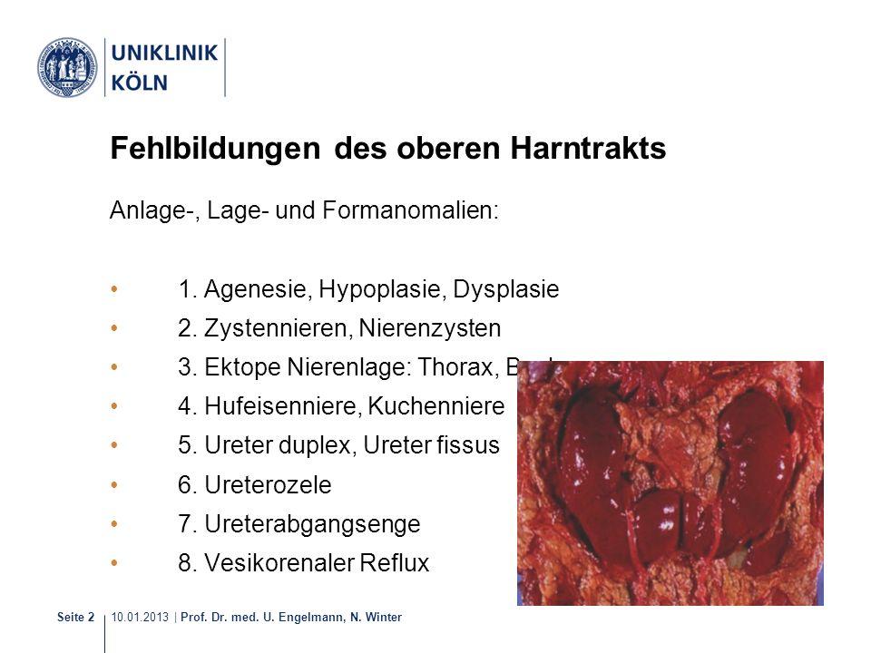 10.01.2013 | Prof. Dr. med. U. Engelmann, N. Winter Seite 2 Fehlbildungen des oberen Harntrakts Anlage-, Lage- und Formanomalien: 1. Agenesie, Hypopla