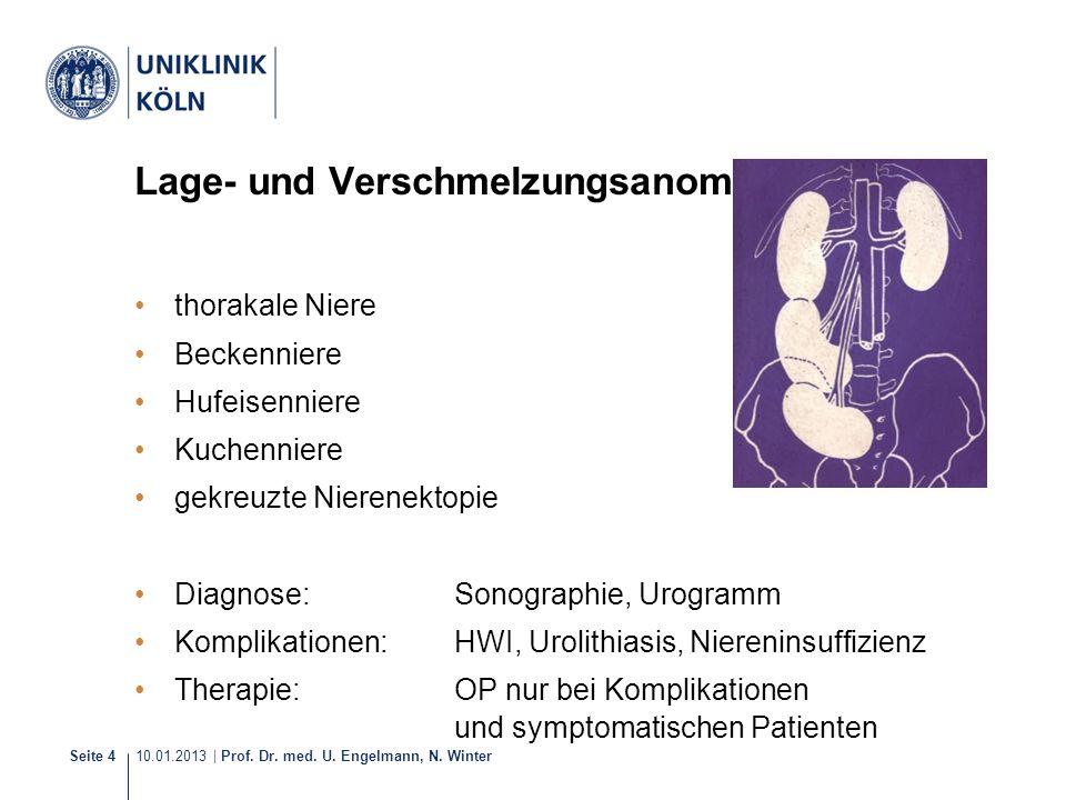 10.01.2013 | Prof. Dr. med. U. Engelmann, N. Winter Seite 4 Lage- und Verschmelzungsanomalien thorakale Niere Beckenniere Hufeisenniere Kuchenniere ge