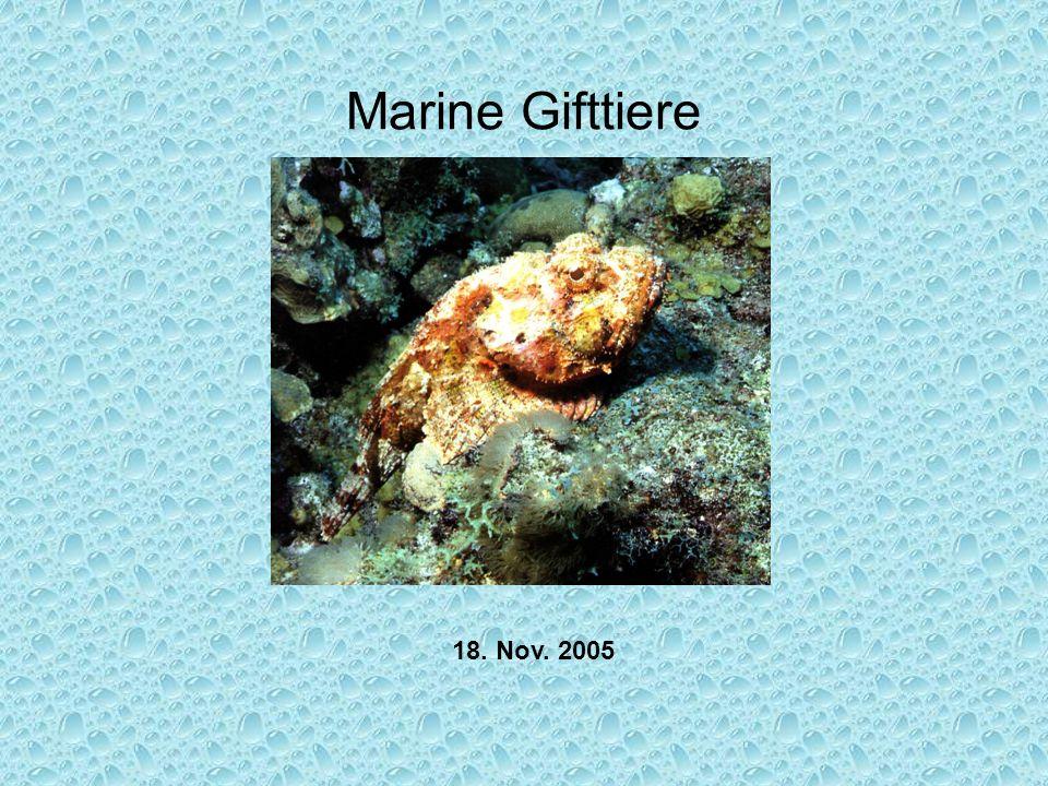 Marine Gifttiere 18. Nov. 2005
