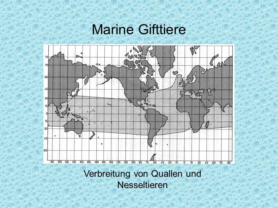 Marine Gifttiere Verbreitung von Quallen und Nesseltieren