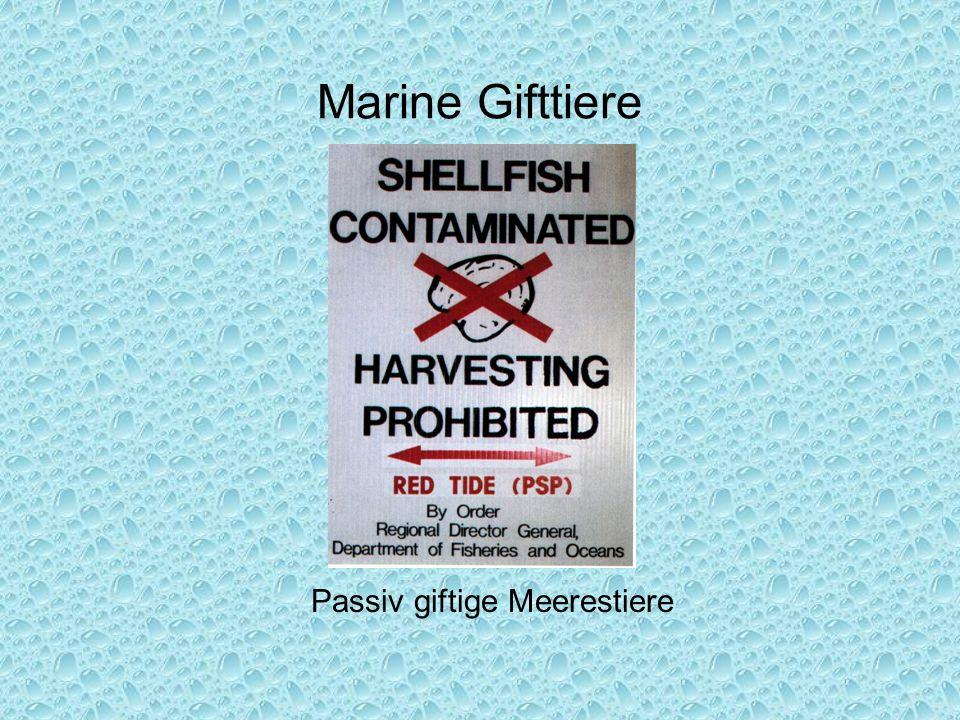Marine Gifttiere Passiv giftige Meerestiere