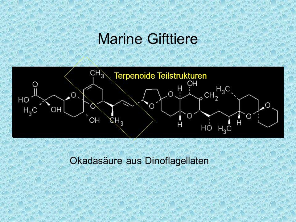 Marine Gifttiere Okadasäure aus Dinoflagellaten Terpenoide Teilstrukturen