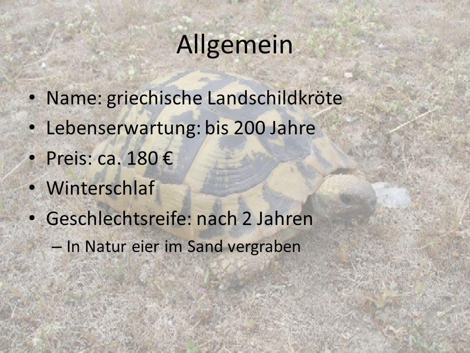 Allgemein Name: griechische Landschildkröte Lebenserwartung: bis 200 Jahre Preis: ca. 180 € Winterschlaf Geschlechtsreife: nach 2 Jahren – In Natur ei