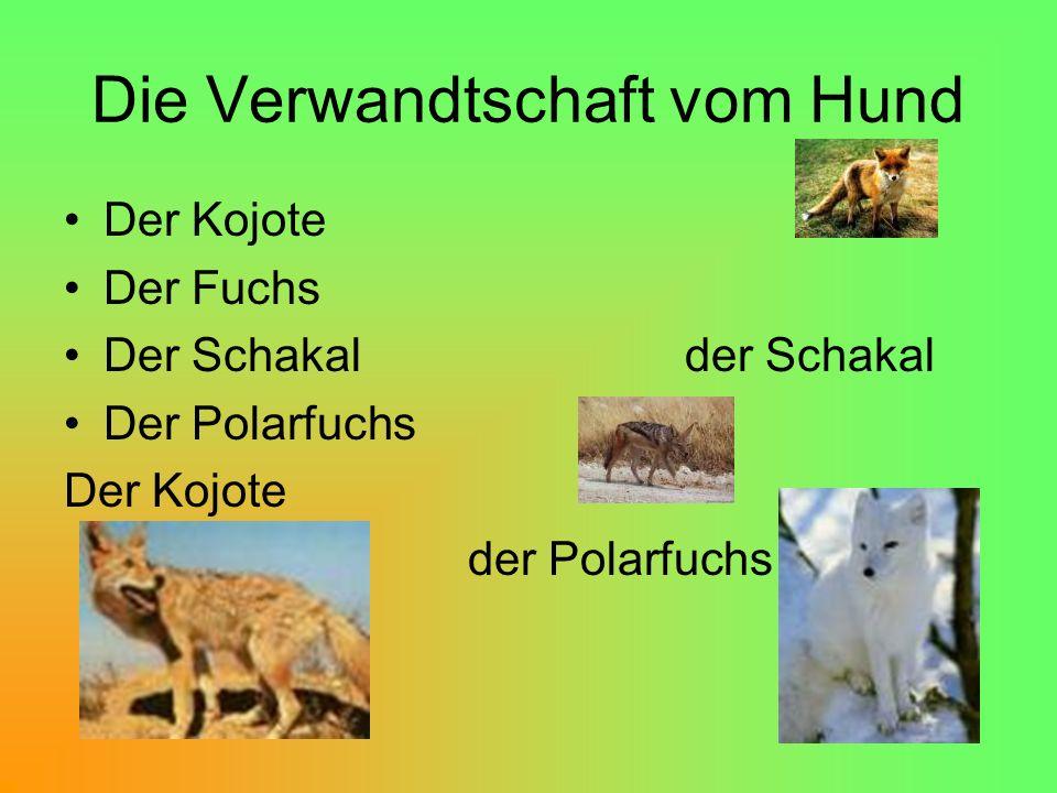 Die Verwandtschaft vom Hund Der Kojote Der Fuchs Der Schakal der Schakal Der Polarfuchs Der Kojote der Polarfuchs