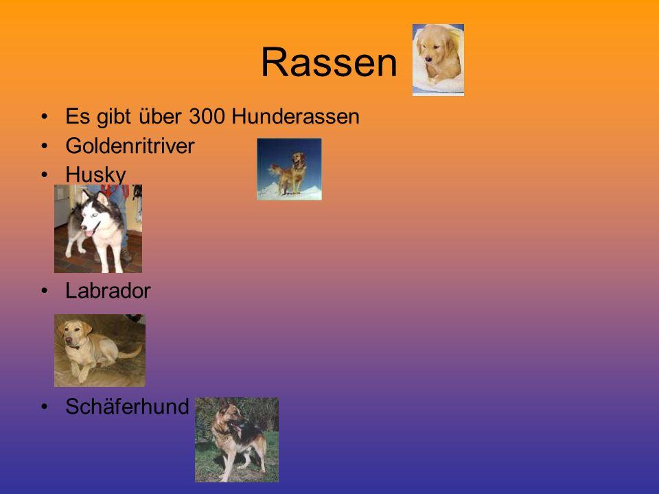 Rassen Es gibt über 300 Hunderassen Goldenritriver Husky Labrador Schäferhund