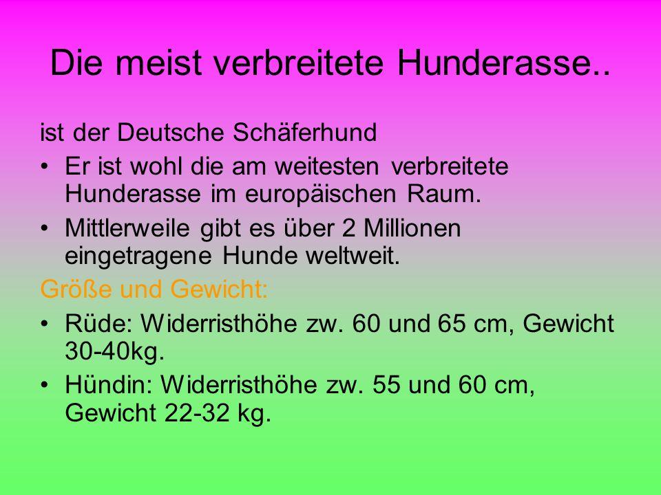 Die meist verbreitete Hunderasse.. ist der Deutsche Schäferhund Er ist wohl die am weitesten verbreitete Hunderasse im europäischen Raum. Mittlerweile
