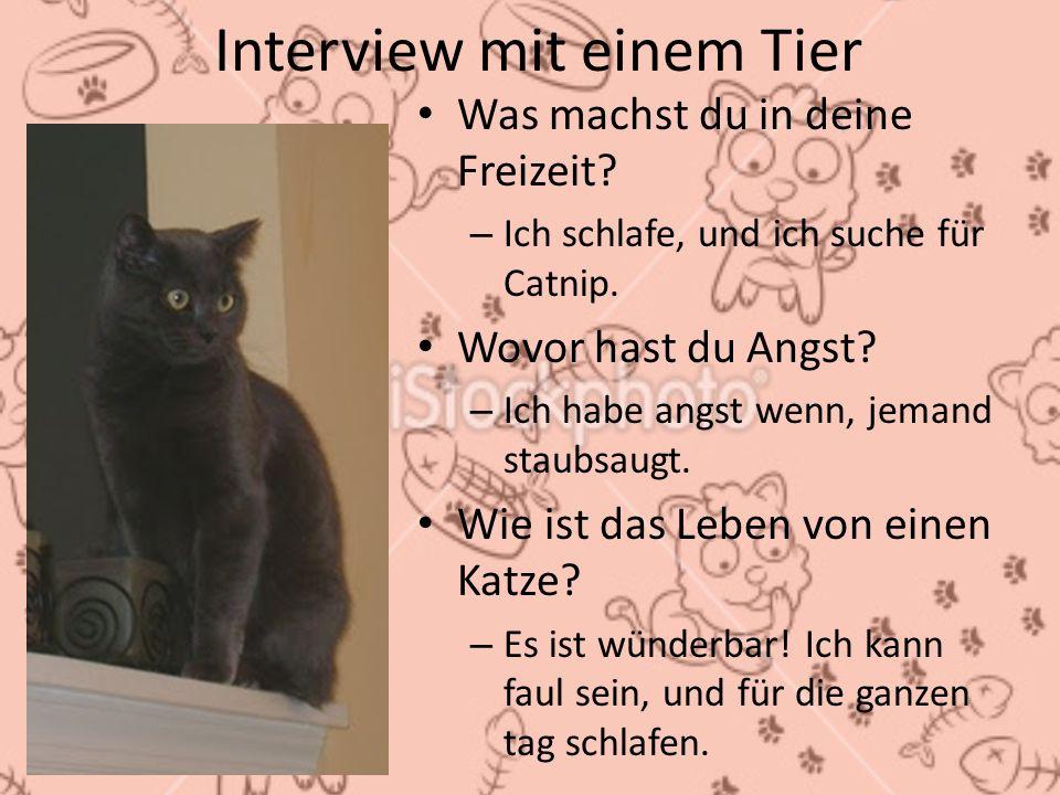 Interview mit einem Tier Was machst du in deine Freizeit? – Ich schlafe, und ich suche für Catnip. Wovor hast du Angst? – Ich habe angst wenn, jemand