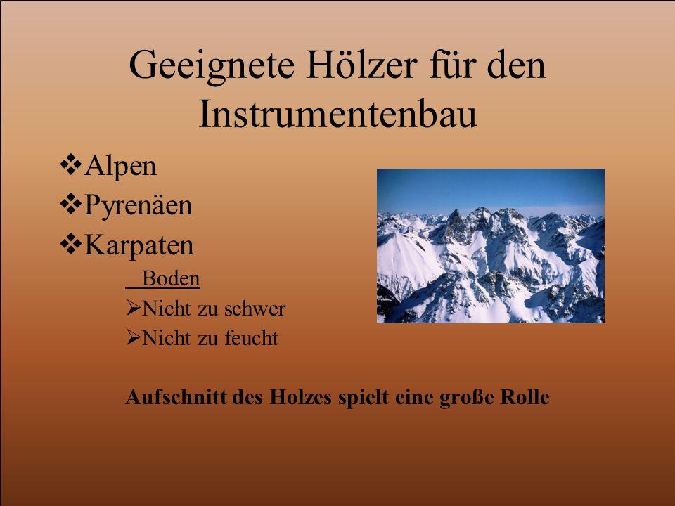 Geeignete Hölzer für den Instrumentenbau  Alpen  Pyrenäen  Karpaten Boden  Nicht zu schwer  Nicht zu feucht Aufschnitt des Holzes spielt eine große Rolle