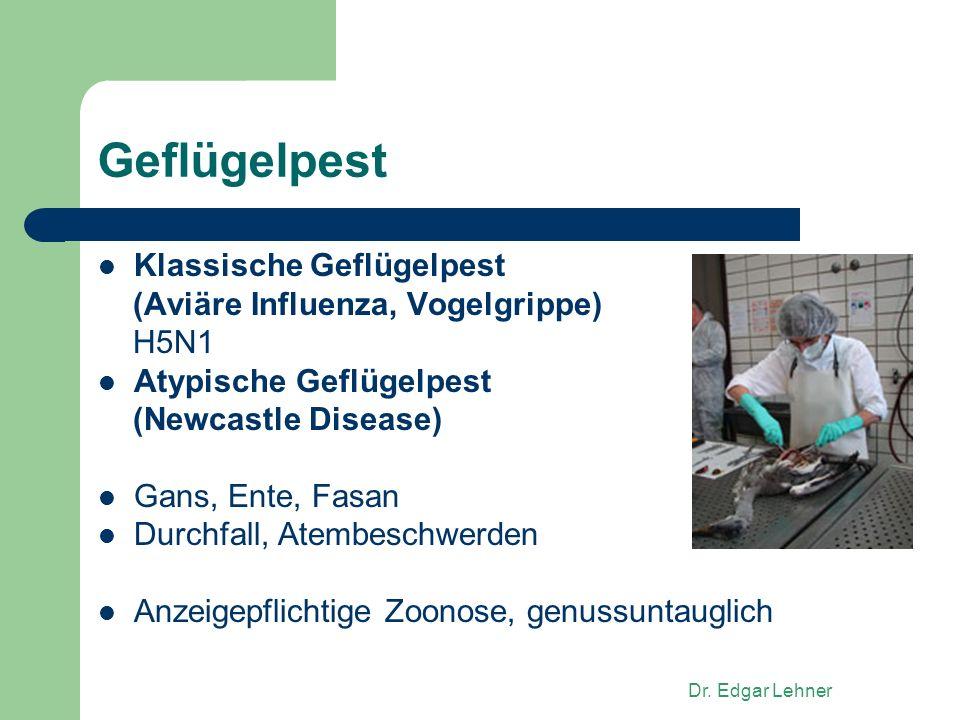 Dr. Edgar Lehner Geflügelpest Klassische Geflügelpest (Aviäre Influenza, Vogelgrippe) H5N1 Atypische Geflügelpest (Newcastle Disease) Gans, Ente, Fasa