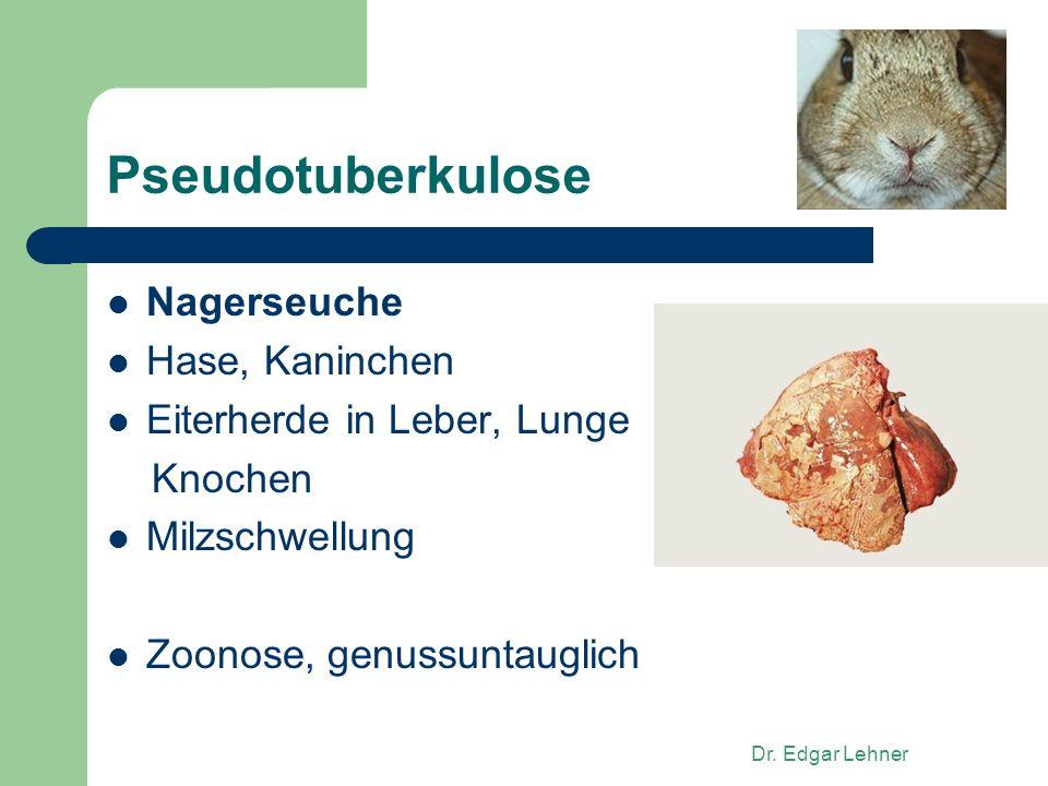 Dr. Edgar Lehner Pseudotuberkulose Nagerseuche Hase, Kaninchen Eiterherde in Leber, Lunge Knochen Milzschwellung Zoonose, genussuntauglich