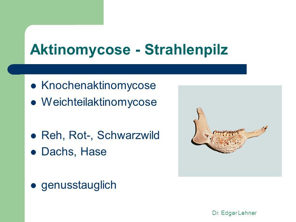 Dr. Edgar Lehner Aktinomycose - Strahlenpilz Knochenaktinomycose Weichteilaktinomycose Reh, Rot-, Schwarzwild Dachs, Hase genusstauglich