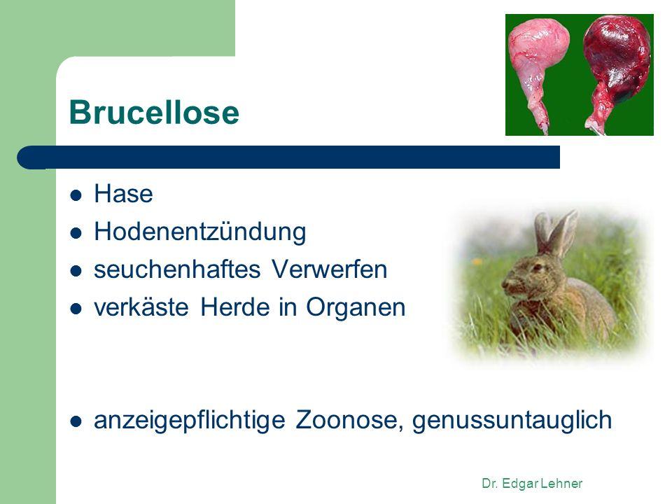 Dr. Edgar Lehner Brucellose Hase Hodenentzündung seuchenhaftes Verwerfen verkäste Herde in Organen anzeigepflichtige Zoonose, genussuntauglich