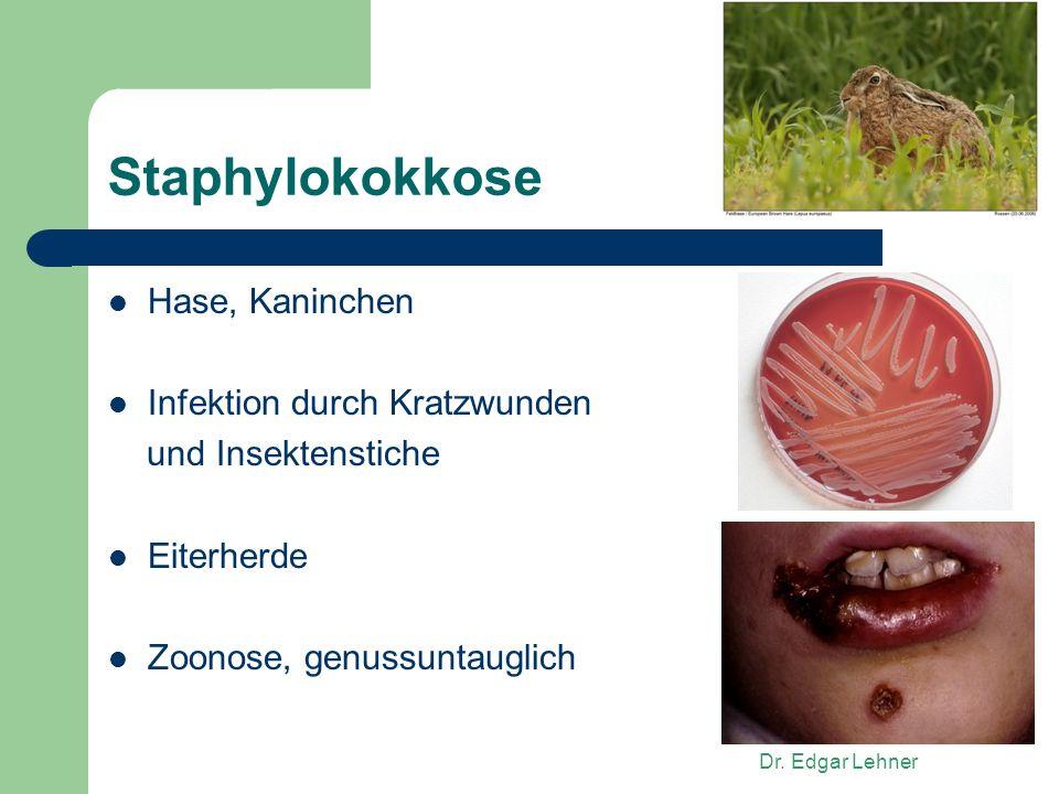 Dr. Edgar Lehner Staphylokokkose Hase, Kaninchen Infektion durch Kratzwunden und Insektenstiche Eiterherde Zoonose, genussuntauglich