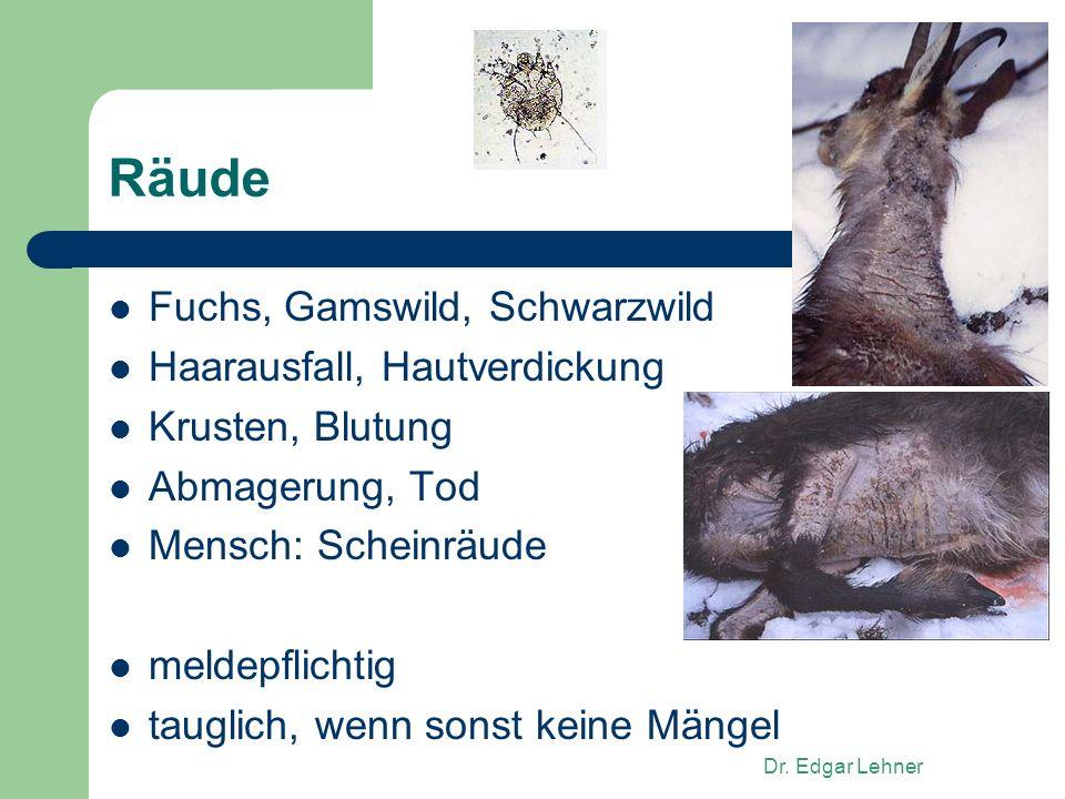 Dr. Edgar Lehner Räude Fuchs, Gamswild, Schwarzwild Haarausfall, Hautverdickung Krusten, Blutung Abmagerung, Tod Mensch: Scheinräude meldepflichtig ta