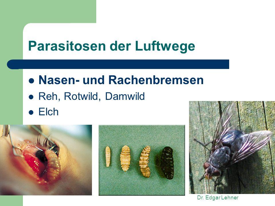 Dr. Edgar Lehner Parasitosen der Luftwege Nasen- und Rachenbremsen Reh, Rotwild, Damwild Elch