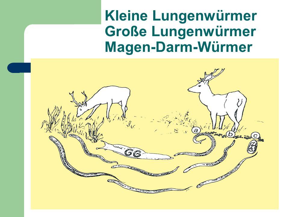 Kleine Lungenwürmer Große Lungenwürmer Magen-Darm-Würmer