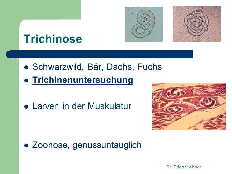 Dr. Edgar Lehner Trichinose Schwarzwild, Bär, Dachs, Fuchs Trichinenuntersuchung Larven in der Muskulatur Zoonose, genussuntauglich