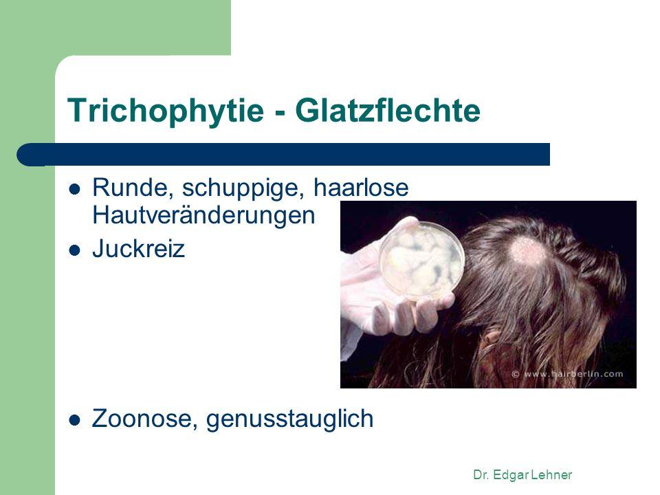Dr. Edgar Lehner Trichophytie - Glatzflechte Runde, schuppige, haarlose Hautveränderungen Juckreiz Zoonose, genusstauglich