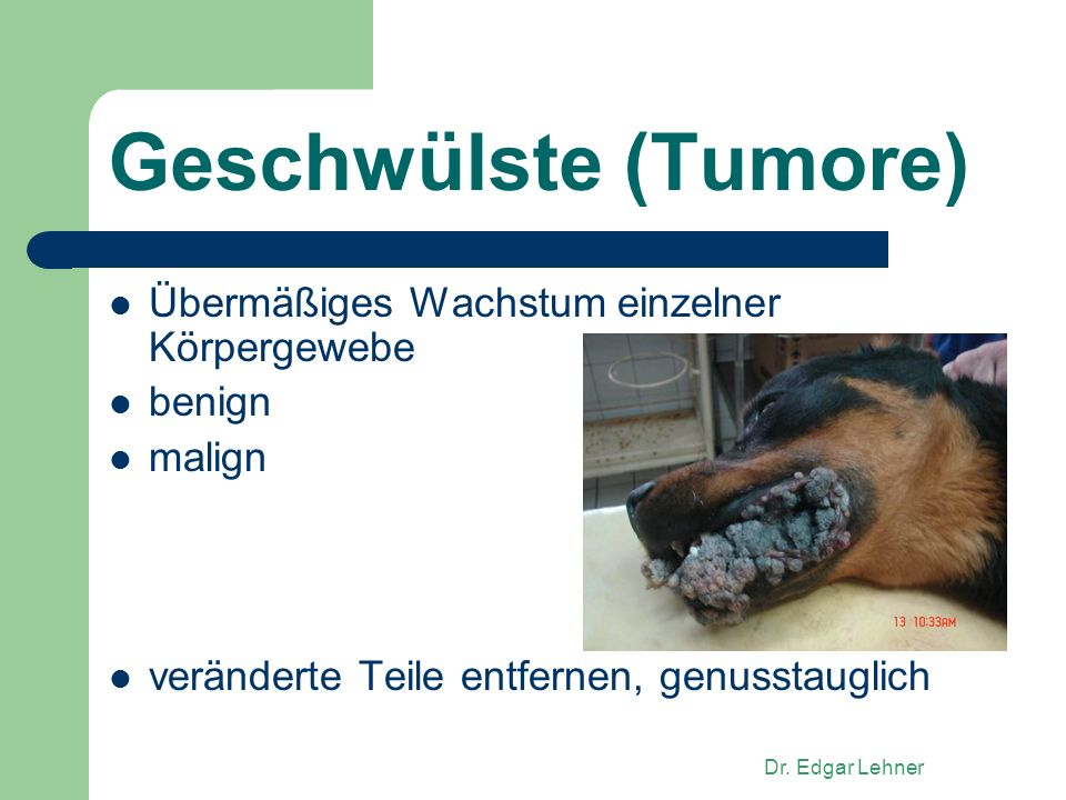 Dr. Edgar Lehner Geschwülste (Tumore) Übermäßiges Wachstum einzelner Körpergewebe benign malign veränderte Teile entfernen, genusstauglich