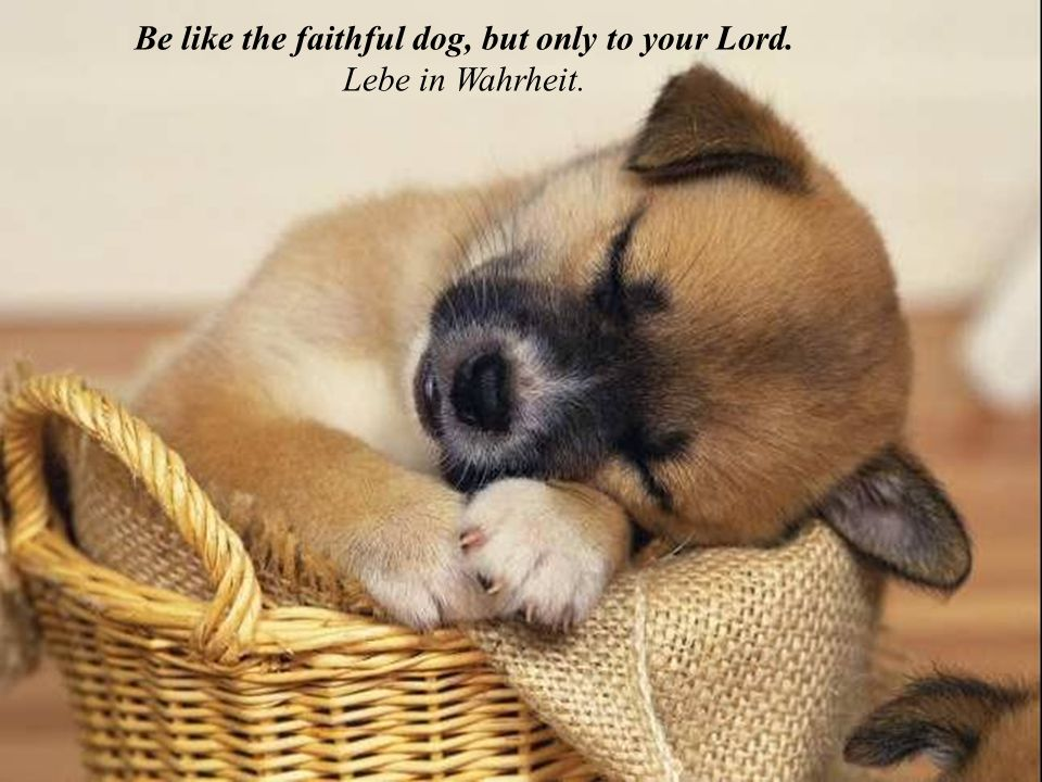 Be like the faithful dog, but only to your Lord. Lebe in Wahrheit.