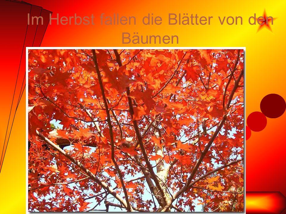 Im Herbst fallen die Blätter von den Bäumen