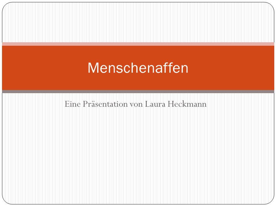 Eine Präsentation von Laura Heckmann Menschenaffen