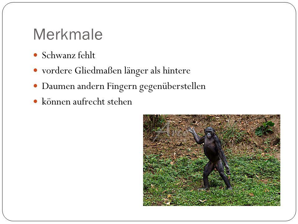 Einleitung Schimpansen Gebrauchen Werkzeuge Müssen Verhalten erlernen möglich Affenpopulationen voneinander zu unterscheiden