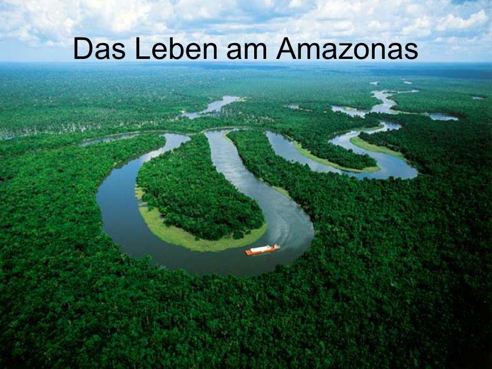 Geografische Lage schlängelt sich durch Südamerika 1.oder 2.längster Fluss der Erde mündet in den Atlantik 10.000 Flüsse kommen im Amazonas zusammen umringt von Regenwald A M A Z O N A S