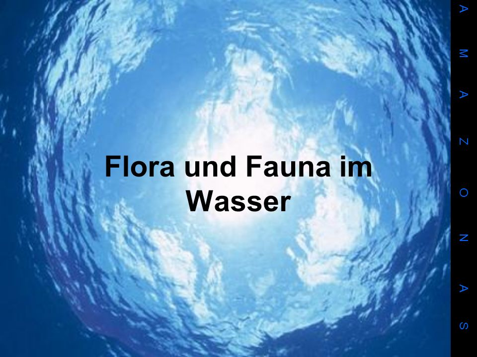 Flora und Fauna im Wasser A M A Z O N A S