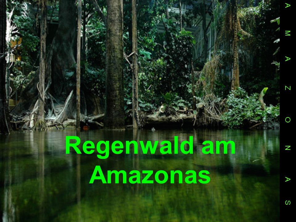 Regenwald am Amazonas A M A Z O N A S