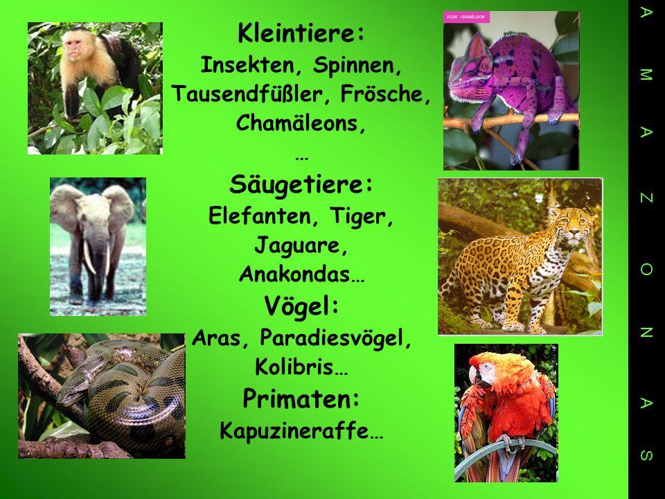 Kleintiere: Insekten, Spinnen, Tausendfüßler, Frösche, Chamäleons, … Säugetiere: Elefanten, Tiger, Jaguare, Anakondas… Vögel: Aras, Paradiesvögel, Kolibris… Primaten: Kapuzineraffe… A M A Z O N A S