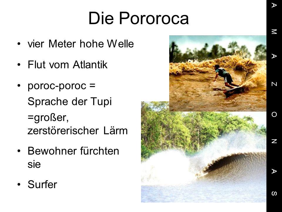 Die Pororoca vier Meter hohe Welle Flut vom Atlantik poroc-poroc = Sprache der Tupi =großer, zerstörerischer Lärm Bewohner fürchten sie Surfer A M A Z O N A S