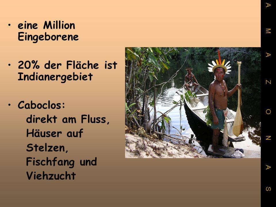 eine Million Eingeborene 20% der Fläche ist Indianergebiet Caboclos: direkt am Fluss, Häuser auf Stelzen, Fischfang und Viehzucht A M A Z O N A S
