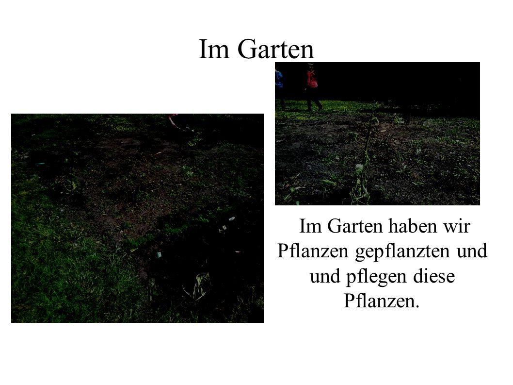 Im Garten Im Garten haben wir Pflanzen gepflanzten und und pflegen diese Pflanzen.