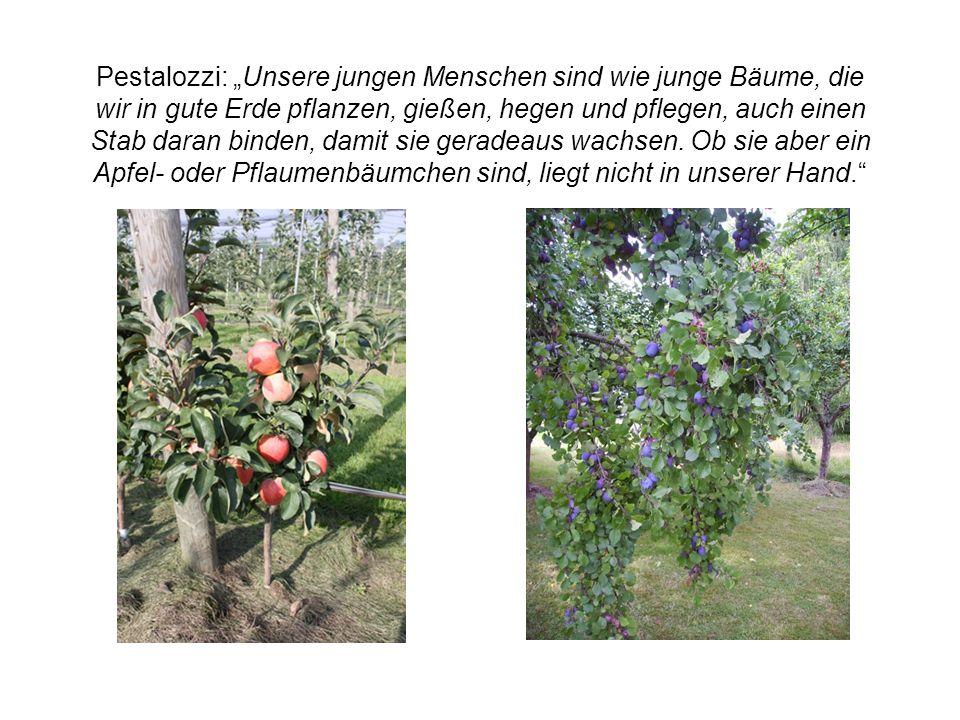 """Pestalozzi: """"Unsere jungen Menschen sind wie junge Bäume, die wir in gute Erde pflanzen, gießen, hegen und pflegen, auch einen Stab daran binden, damit sie geradeaus wachsen."""