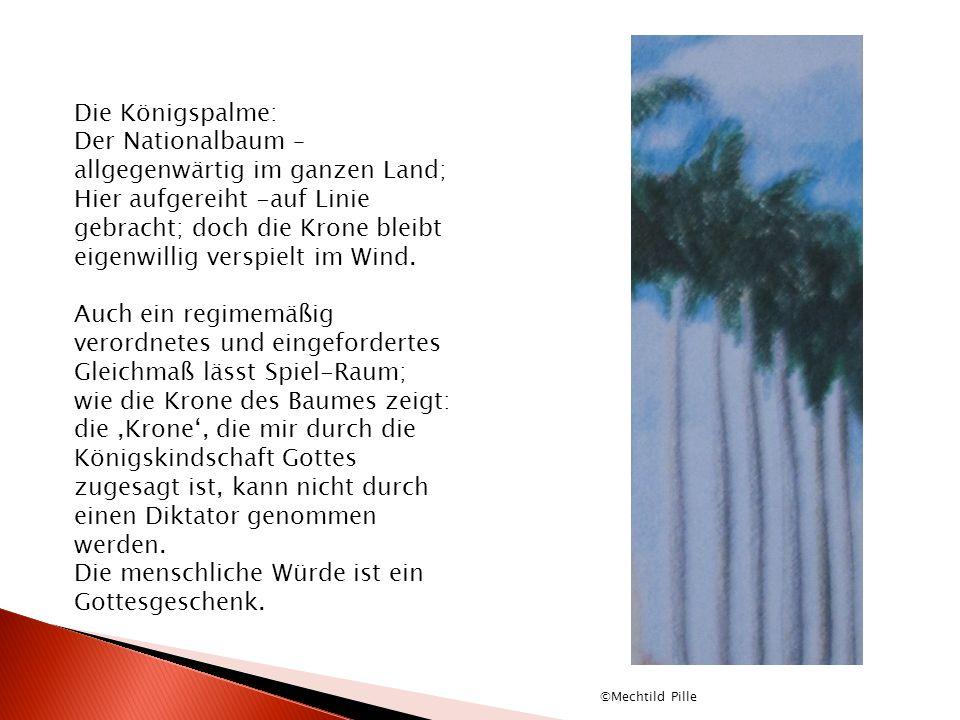 Die Königspalme: Der Nationalbaum – allgegenwärtig im ganzen Land; Hier aufgereiht -auf Linie gebracht; doch die Krone bleibt eigenwillig verspielt im