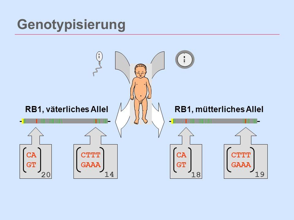 Genotypisierung RB1, väterliches AllelRB1, mütterliches Allel CA GT 20 CTTT GAAA 14 CA GT 18 CTTT GAAA 19