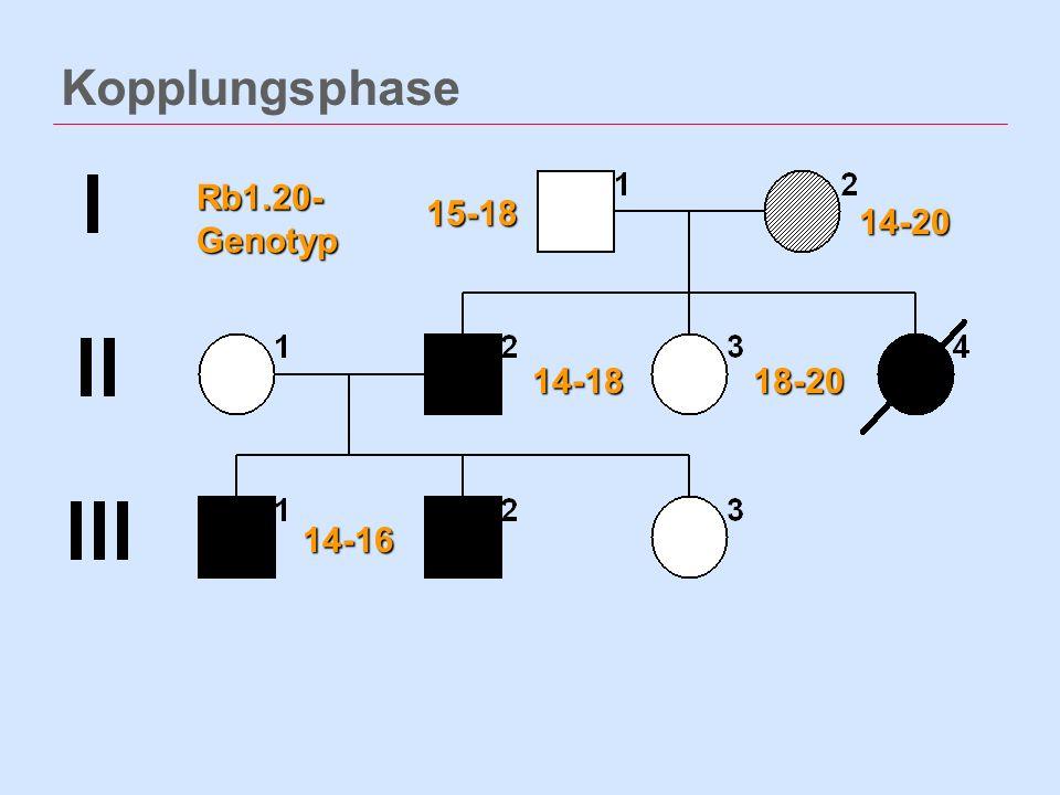 Kopplungsphase 14-20 14-18 15-18 18-20 14-16 Rb1.20- Genotyp