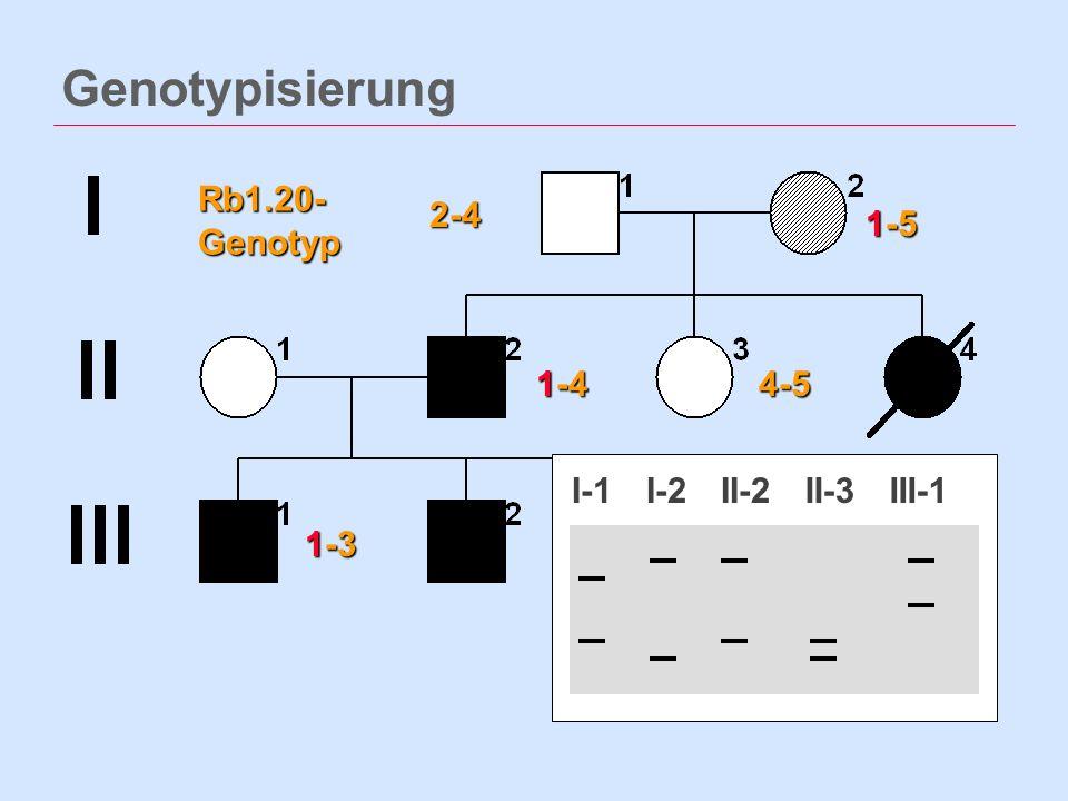 Genotypisierung 1-5 1-4 2-4 4-5 1-3 Rb1.20- Genotyp I-1I-2II-2II-3III-1