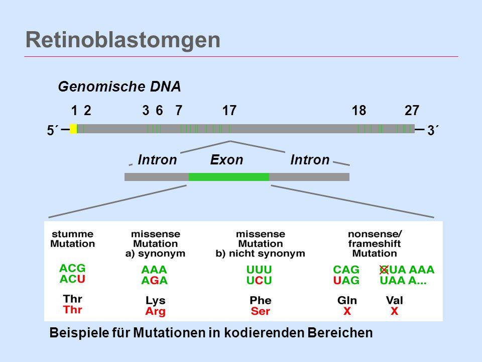 Retinoblastomgen 12367171827 5´3´ Genomische DNA ExonIntron Beispiele für Mutationen in kodierenden Bereichen